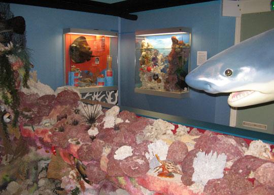 Den-haag_scheveningen-muzee-koraalrif
