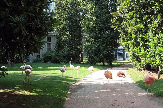 Milaan_villa-invernizzi-flamingo