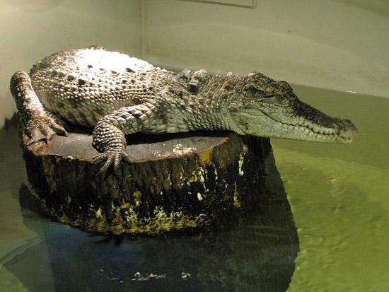 Praag_krokodillen_zoo.jpg