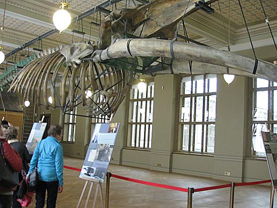 Praag_nationaal_museum_walvis.jpg