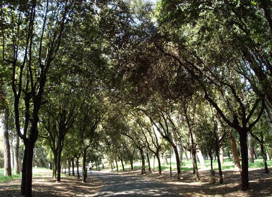 Rome_villa-glori-park