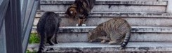katten-rome
